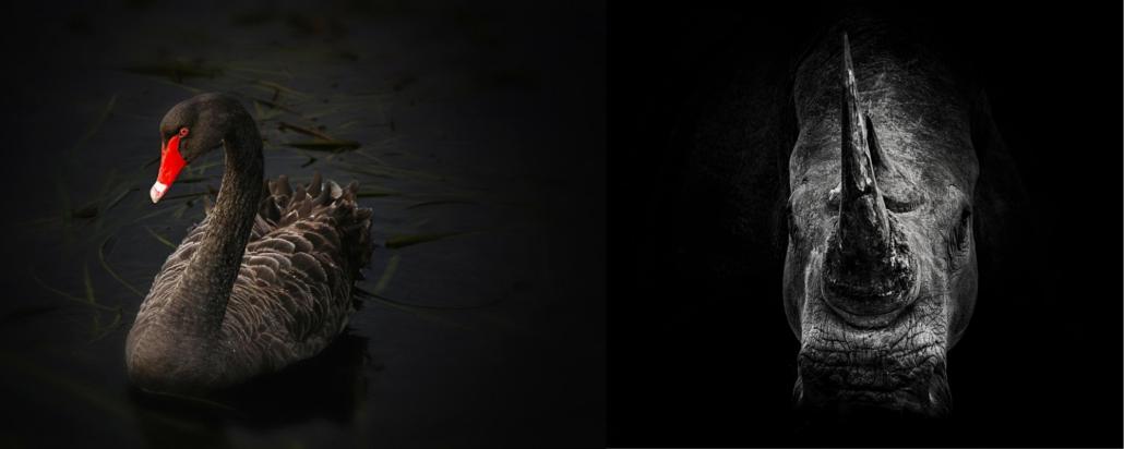 Black swan versus Grey Rhino